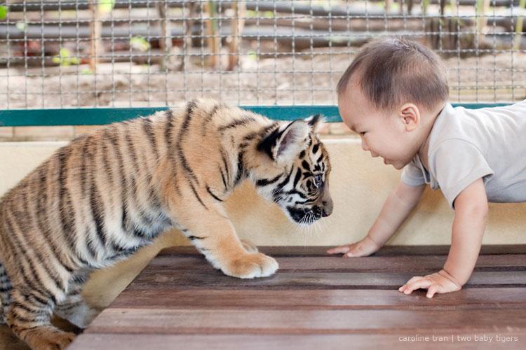 baby tigers thailand caroline tran los angeles wedding baby